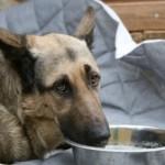Toilas kraavi surema jäetud koer paraneb jõudsalt