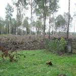 Rüüstatud kalmistu muudetakse pargialaks