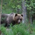 Looduskalender toob Alutaguse metsas toimuva koju kätte