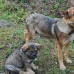 Suvilahooaja lõppedes hüljatakse sadu kasse ja koeri