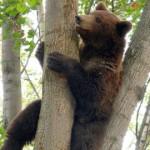 Karu rüüstab Vaivara vallas mesipuid