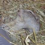 Patrick Bo Squirrel – üks ütlemata terane koopaorav