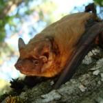 Narva nahkhiired saavad endale uued suvilad