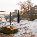 Nahkhiired ei tohi Narva puude mahavõtmise pärast kannatada