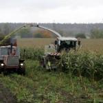 Maisipõllud tõotavad head saaki