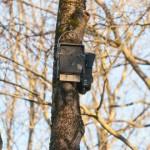 Narvas valmisid nahkhiirte suvilad