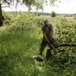 Õunaaed asendub viljapõlluga
