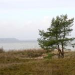 Lüganuse elanikud tahavad eelarverahaga randa korrastada ja parklat ehitada