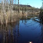 Fenoolisoost tuleb Purtse jõe reostusele lisa