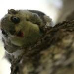 Lendoravat ähvardab Eestis väljasuremine