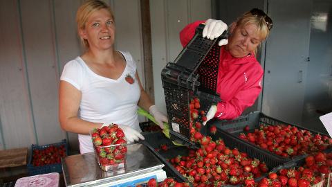 Tormast pärit kaksikõed Piia (vasakul) ja Piret avasid eile Jõhvi turul oma tänavuse maasikamüügihooaja.