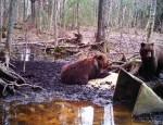 Seesuguseid karudega pilte on jahimeestel tänu rajakaameratele kümneid näidata; need mõmmikud on jäädvustatud 25. aprillil Virunurmes.