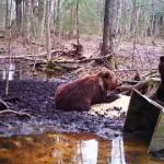 Karu murdis Sakal kaks lammast