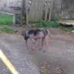 Karvutuks jäänud koera omanik keeldus abist
