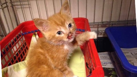 Ahtme linnaosa tänavalt päästeti läbikülmunud ja verine kassipoeg, kes oli mõni aeg enne seda omanikku vahetanud.