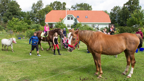 Kõrkkülas asuv Raja talu on olnud avatud talu päeval menukas külastuspaik.