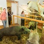 Iisaku muuseumi karutopis hakkas möirgama