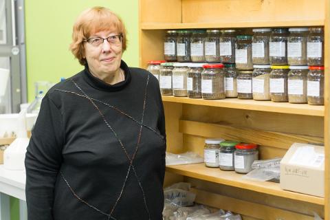 Hella Riisalu võrdleb laboris purkides olevate erisuguste kütuste proovide kogu moosiriiuliga sahvris.