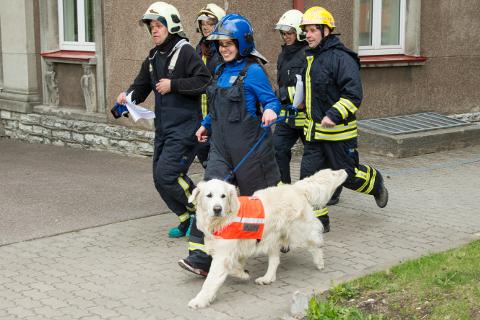 PäästeametiPäästerottide kõneisik Evelin Mäetaga, kelle koera nimi on Pluuto, kinnitas, et võidujooksu ajal ei jää ükski põleng kustutamata ega keegi päästmata.