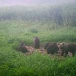 Karujahi piiramine pani Mäetaguse jahimehed nurisema