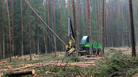 Metsamehed ootavad paremat turgu ka võsale ja oksarisule, mis praegu nii raielankidele kui ka kraavipervedele lihtsalt maha jäetakse.