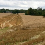 Viiendik vilja jääb põllule