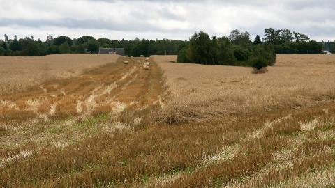 Pidev vihm on vilja maadligi surunud ja põllud pehmeks muutnud.